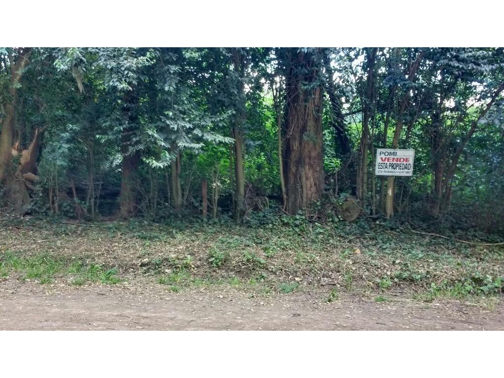 ROBLES DEL MONARCA (KM 48 PANAMERICANA) CALLE EL PALENQUE Y PLATANOS  LA LONJA PILAR MUY BUENA ZONA