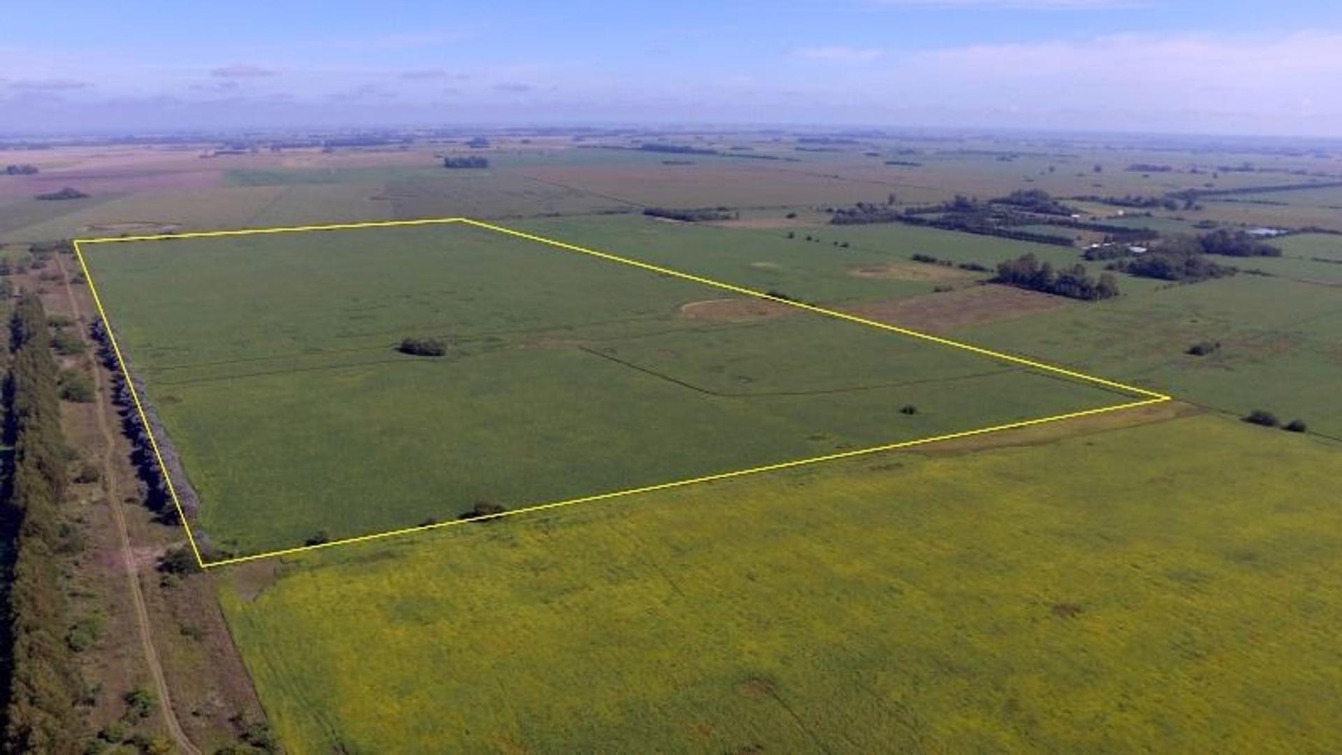 85 Has agrícolas entre Capilla y Areco