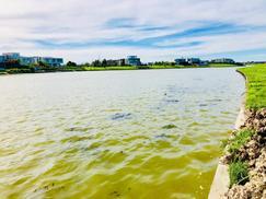 Dueño Vende El mejor lote al lago central