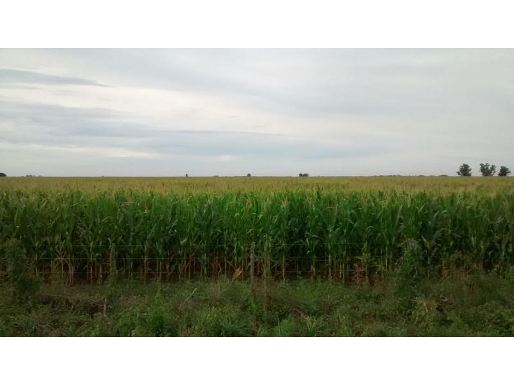 142 has muy buen campo agrícola