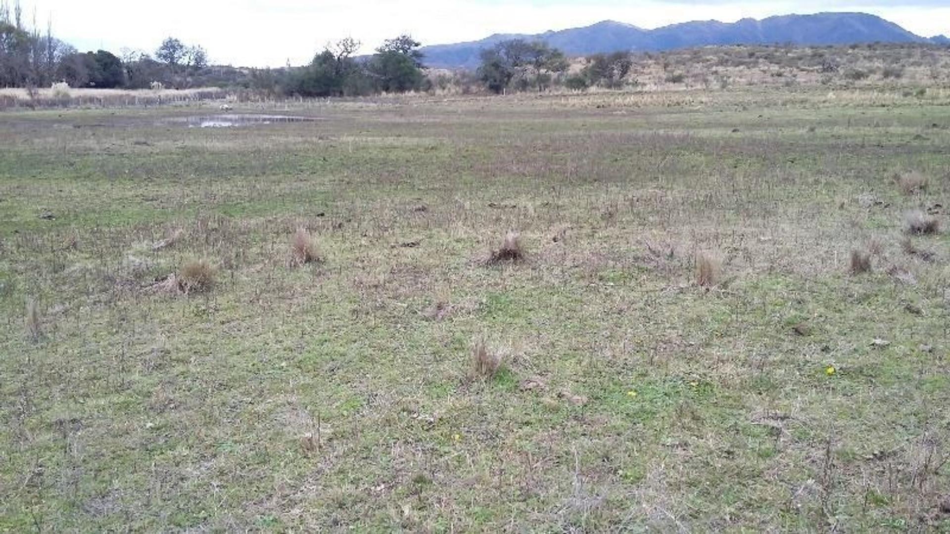 Vendo campo ganadero de 293 has en El Morro