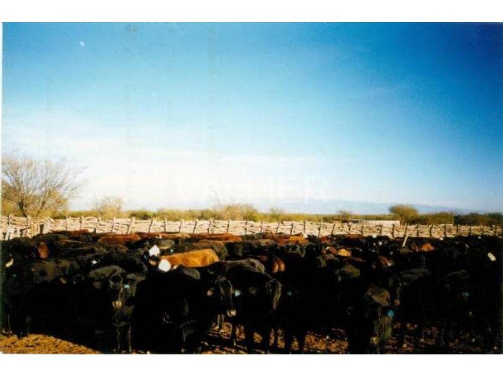 Venta de Estancias y Campos en  zona Chepes, La Rioja, Argentina, 10.000 Has Chepes, La Rioja