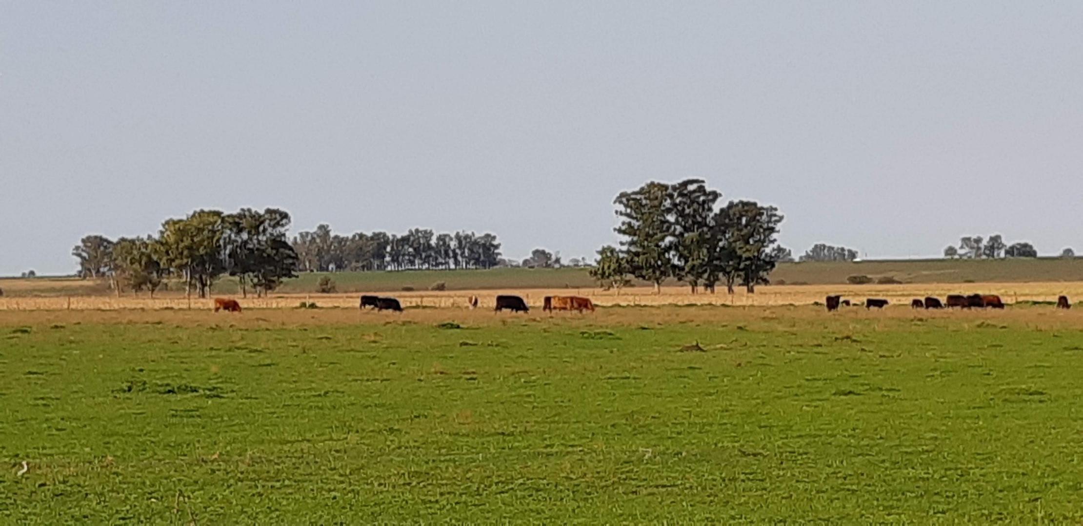 Campo en Venta en Gualeguaychu
