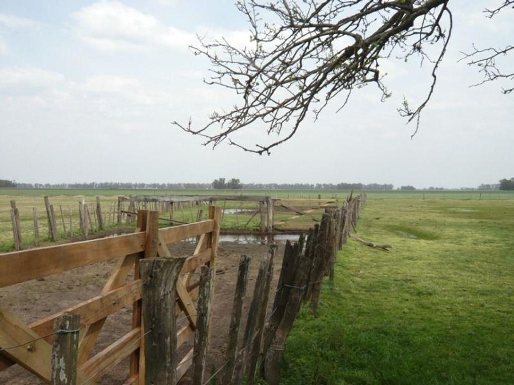 Campo de 320 hectáreas en Ruta 3 Km. 88. Cañuelas