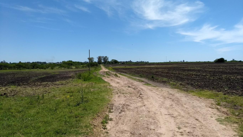 81,6 has campo agrícola ganadero con granja porcina