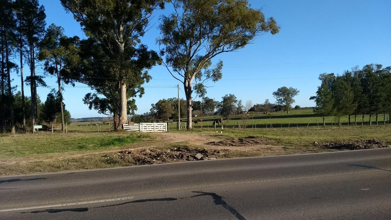 88 has campo agrícola ganadero forestal excelente ubicación