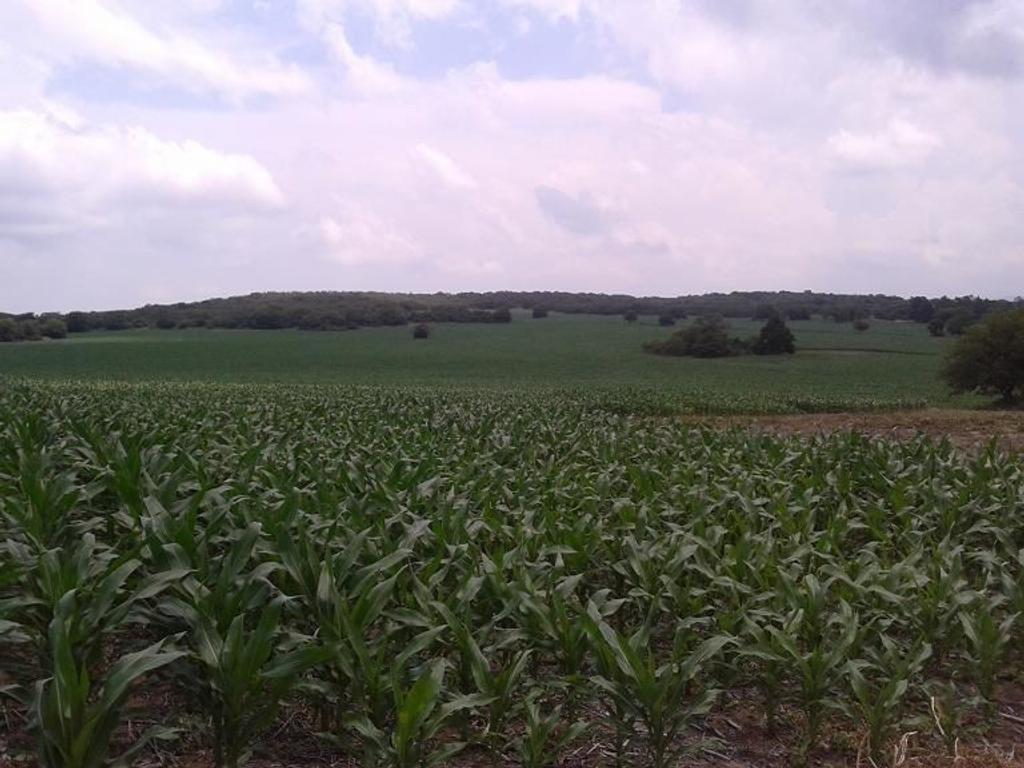 Campo de 90 ha. a 45' de Córdoba. Agrícola. Ideal Mixto