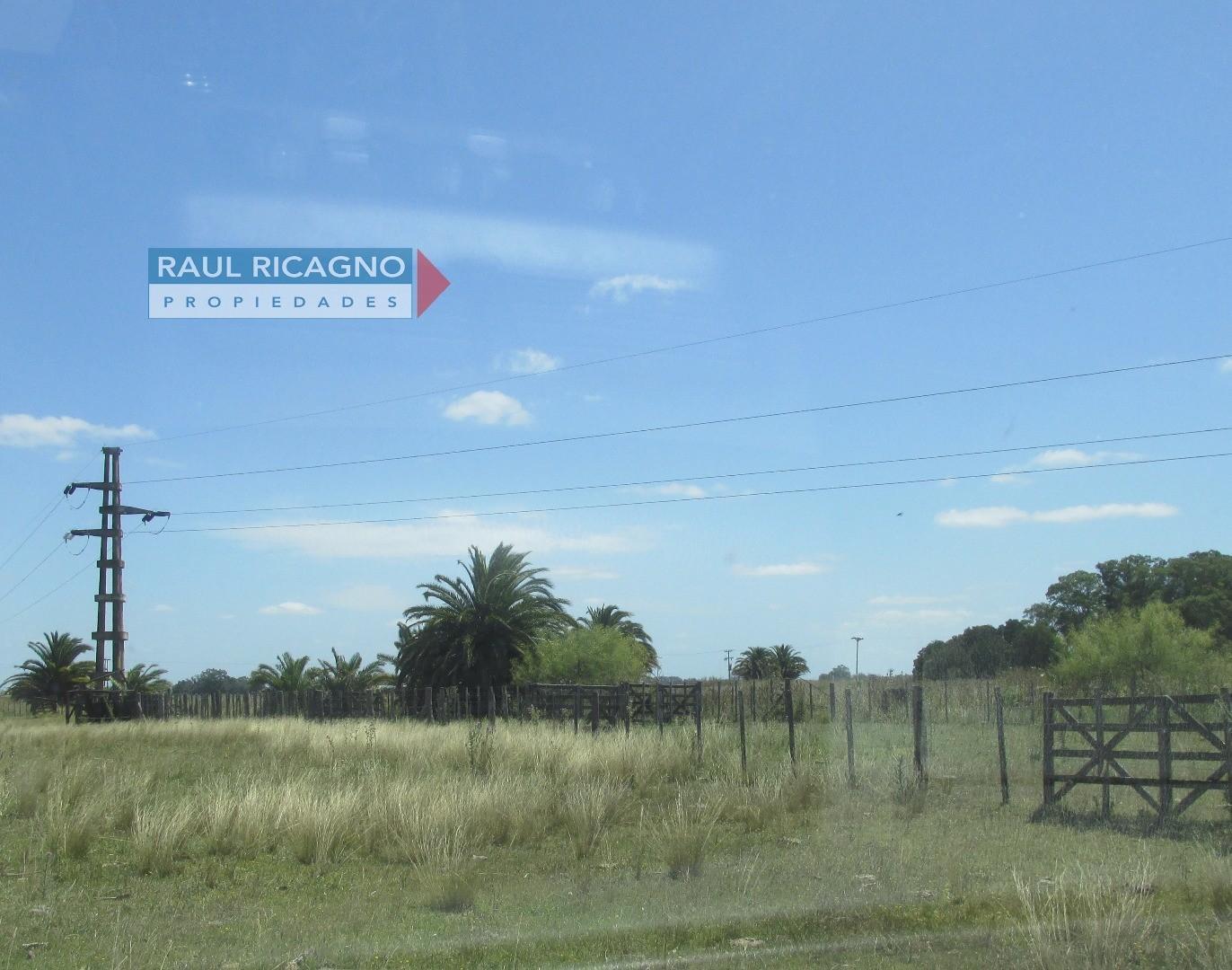 Campo en Venta en Chascomús. ÓPTIMO FEEDLOT. - Foto 14