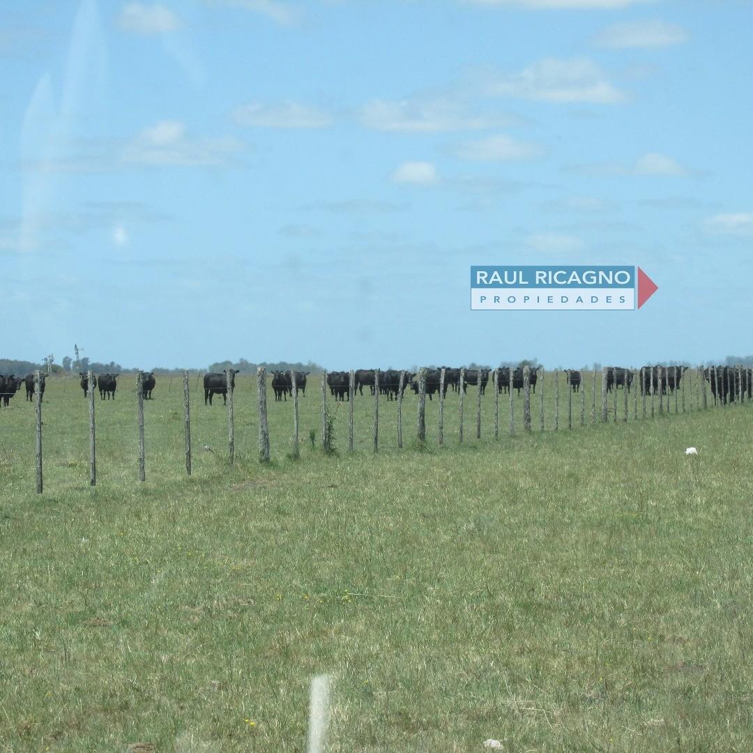 Campo en Venta en Chascomus