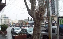 Local en alquiler en Avellaneda - 500 mt2 - Apto todo rubro - Sobre importante Avenida