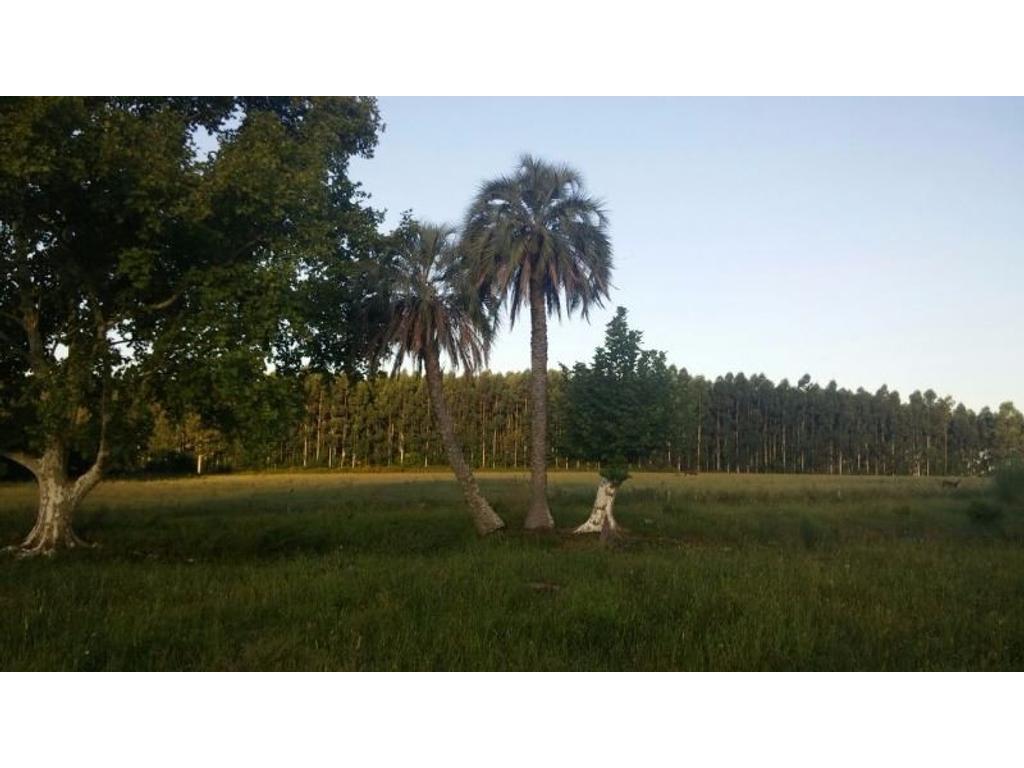 Excelente Campo de 7 ha. Un lugar especial para hacerlo propio