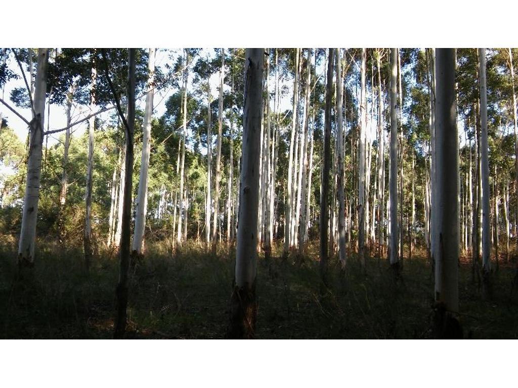 Campo Ganadero-Forestal