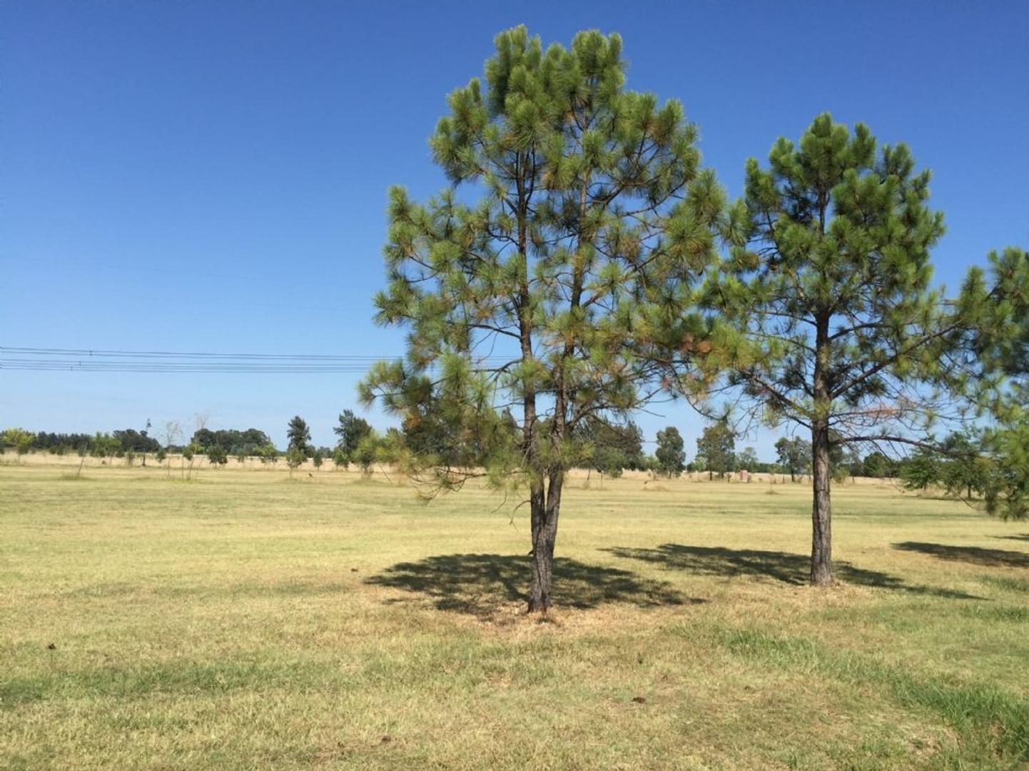 Terreno Lote  en Venta ubicado en El Nacional, Zona Oeste - OES0695_LP107076_1