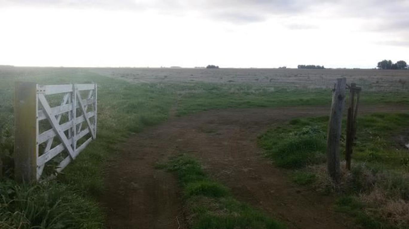 EXCELENTE CAMPO AGRÍCOLA-GANADERO SOBRE RUTA 60 A 15 KM. DE CARHUÉ