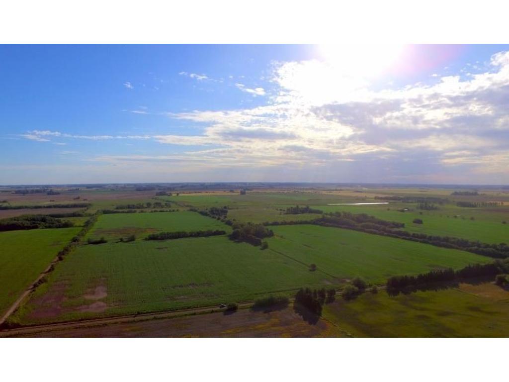 Campo agrícola con añosa arboleda