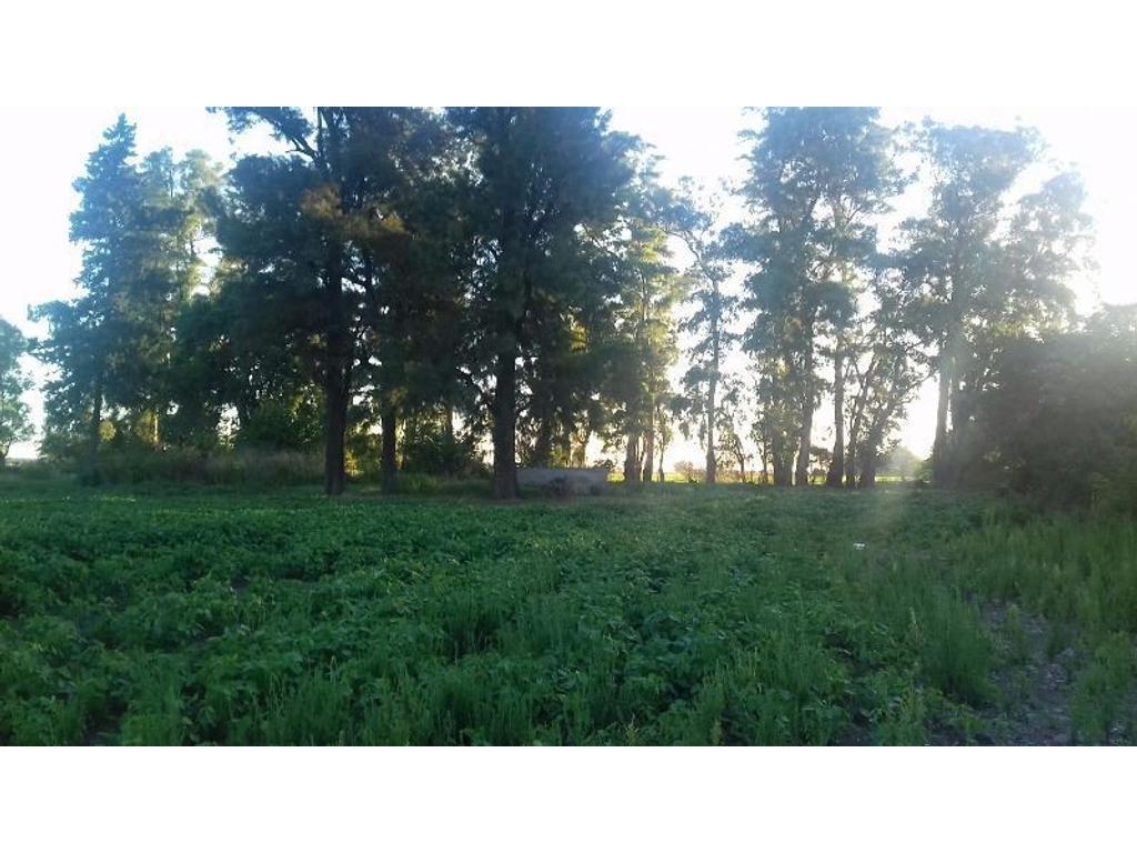 5 Has . Rural , ideal cultivos intensivos excelente tierra ,a 1500 metros de asfalto  sin casa.