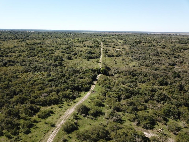 Campo - 3.700 ha | Ganadero | Muy Bueno