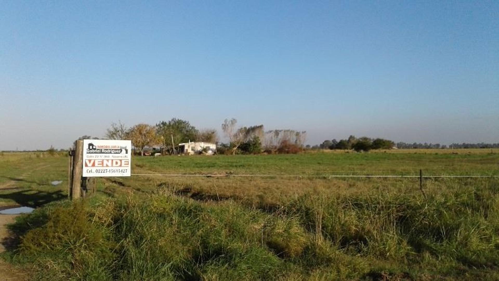 VENDEMOS CAMPO EN EL PARTIDO DE NAVARRO = 26,4 has agrícolas