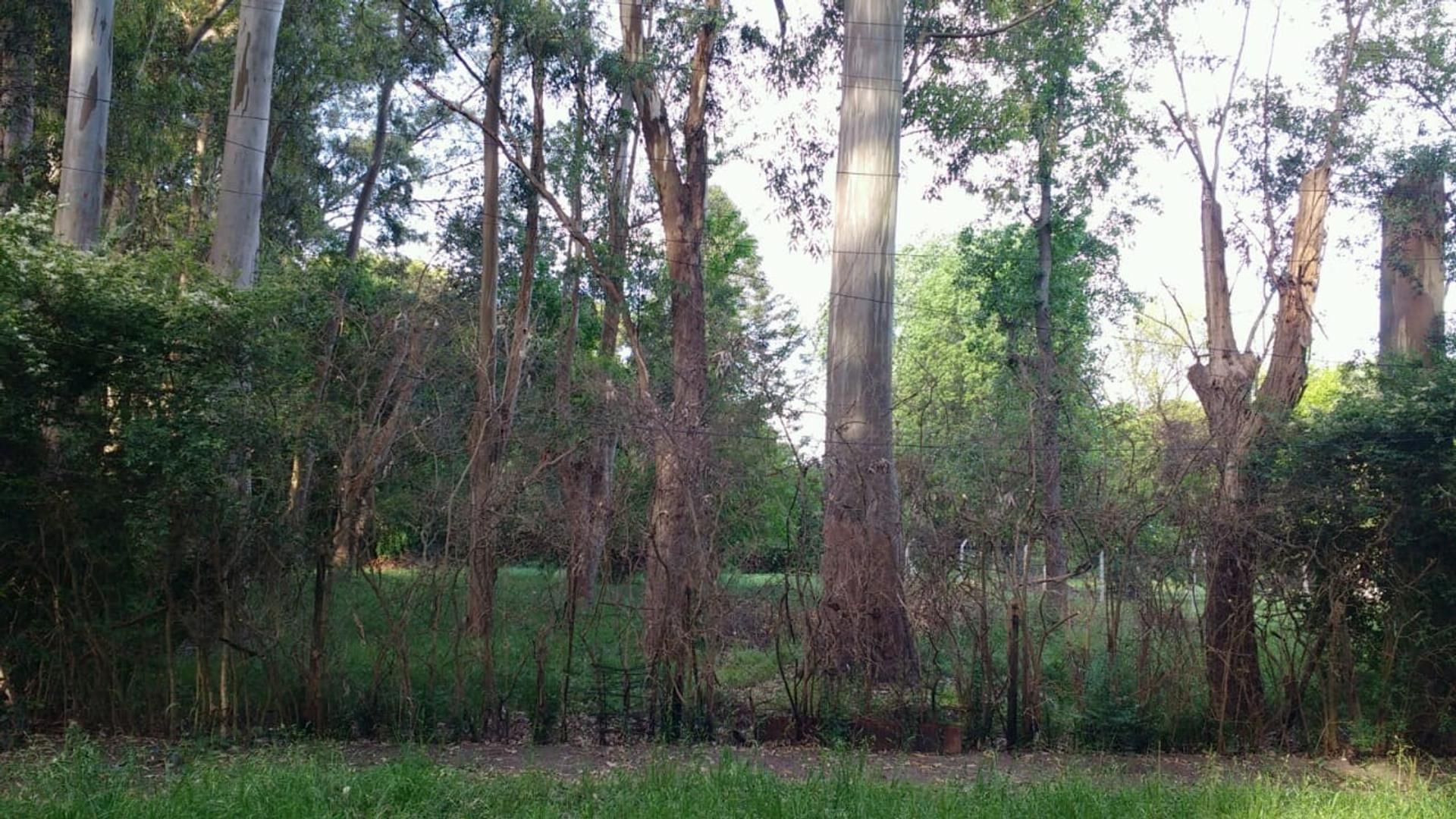 Terreno en Venta en Parque Udaondo