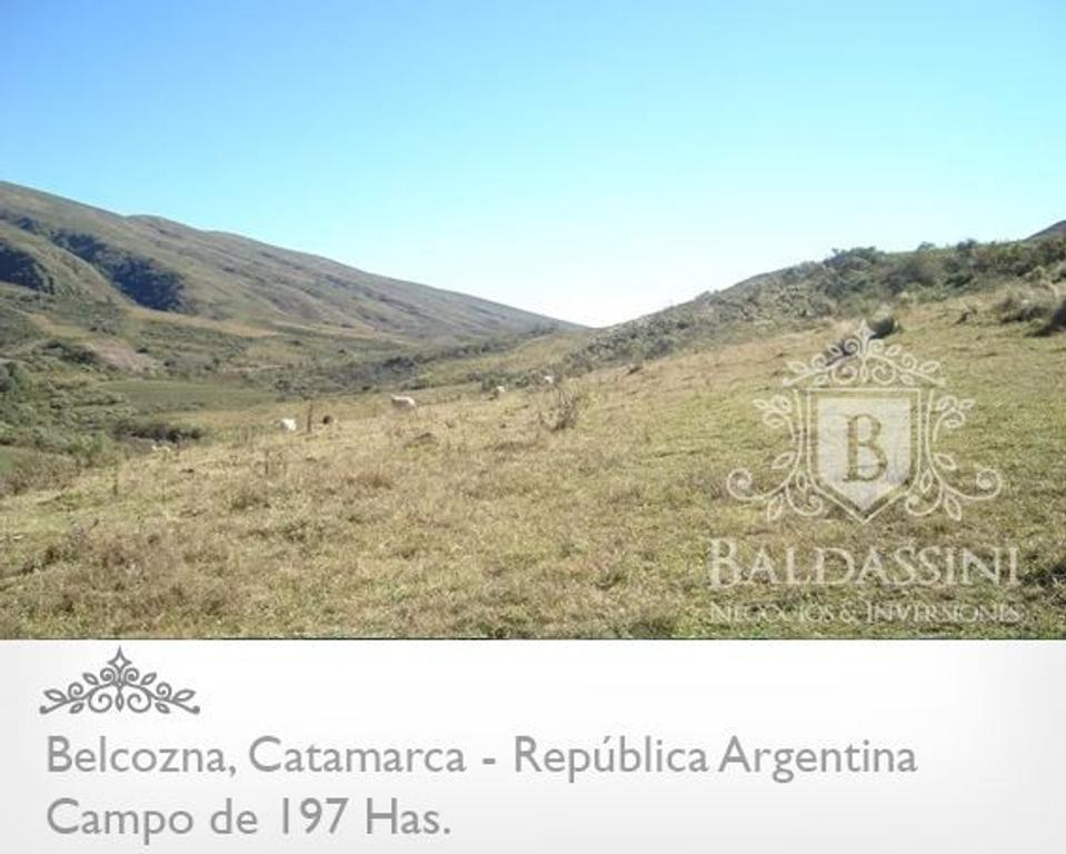 CAMPO DE 197 HAS. EN VILLA BALCOZNA - CATAMARCA A DESARROLLAR SOBRE RUTA 9