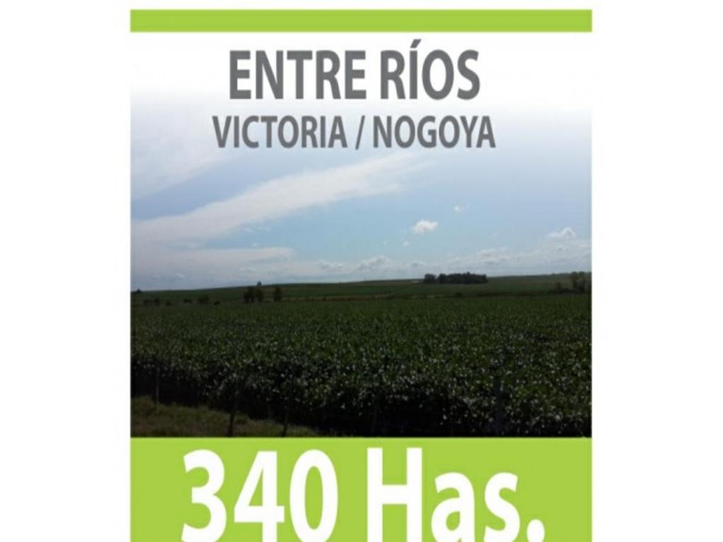 340 Has. AGRICOLAS  VICTORIA/NOGOYA