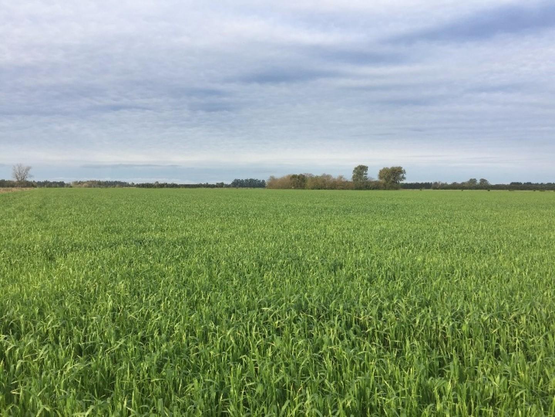 Campo agrícola de 7,5 has excelente calidad de suelos