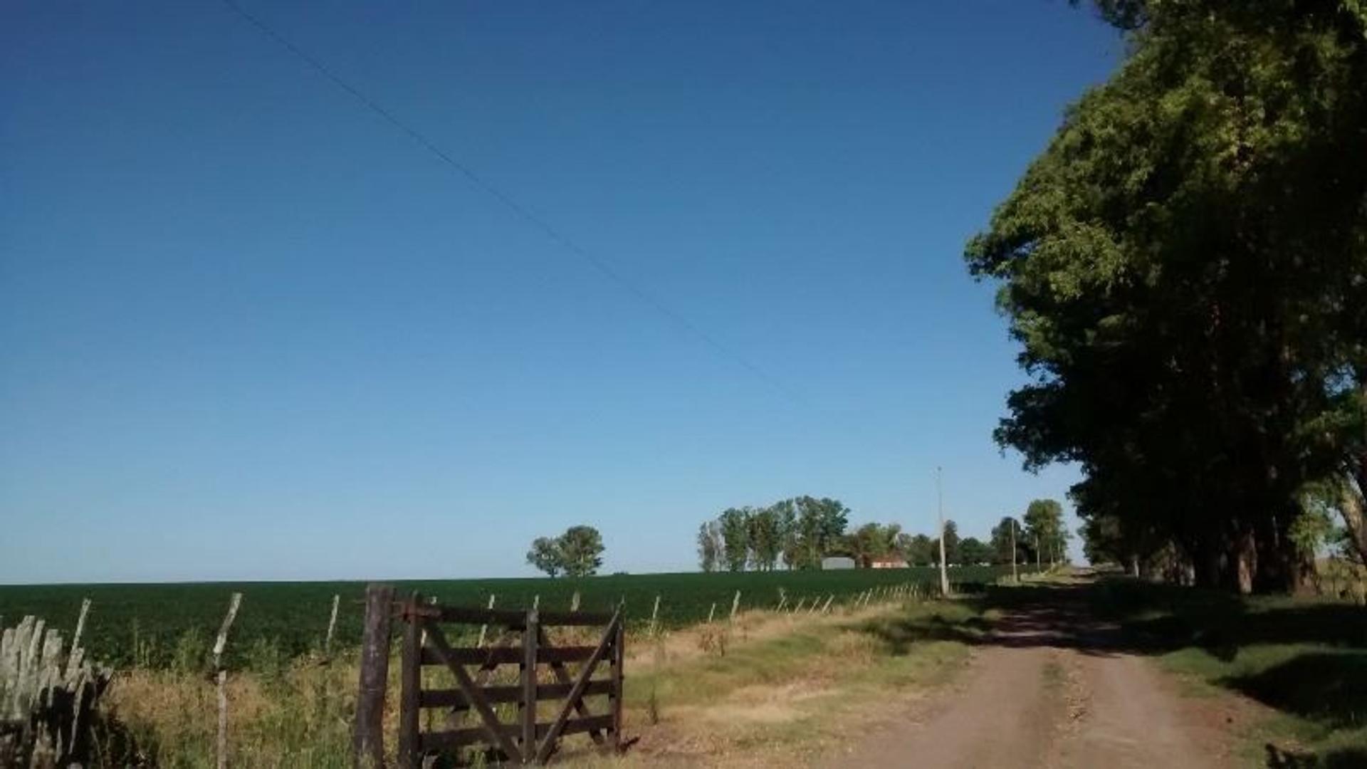 290 has Excelente campo agrícola ganadero