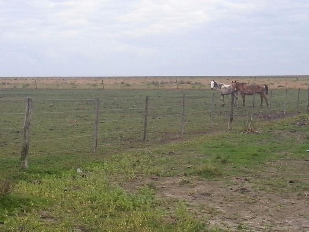 Campo 10.000 hectareas
