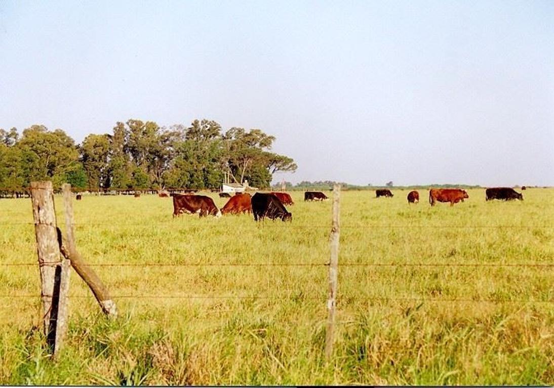 450 hectáreas en General Las Heras. Excelente propiedad.