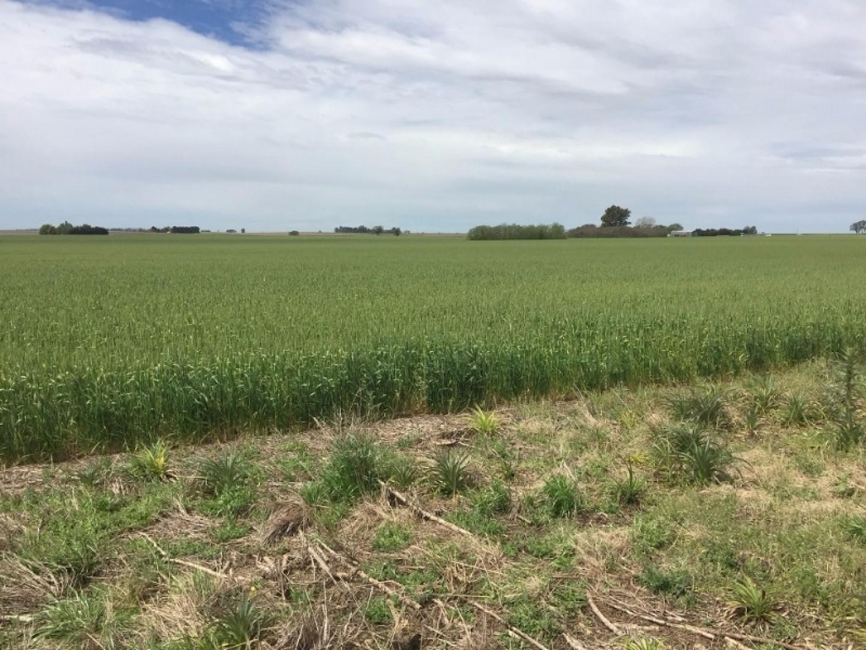 33 has agrícolas de excelente calidad de suelos OPORTUNIDAD