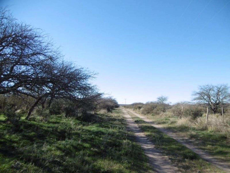 Campo - 1.240 ha | Cría | Muy Bueno