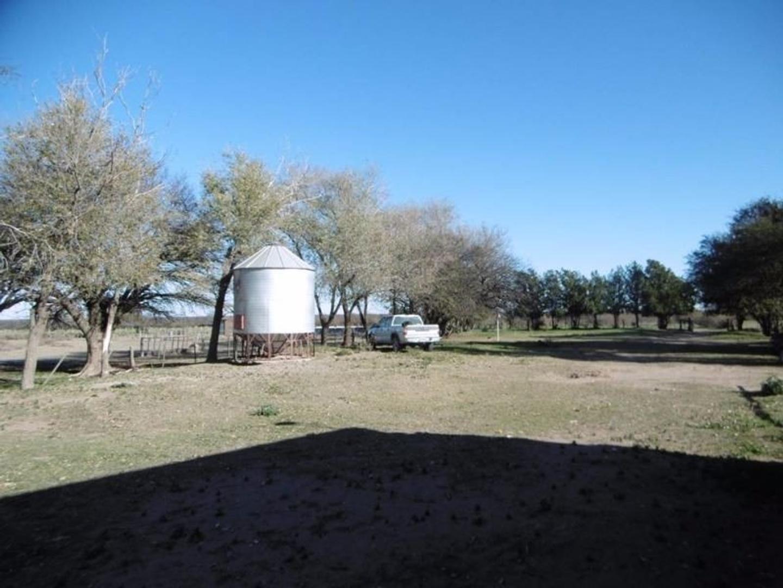 1240 has. de cria, recria o engorde - Venta - Hucal, La Pampa - Foto 4