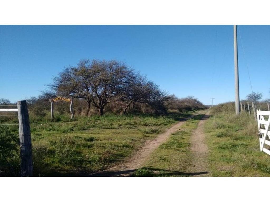 1240 has. de cria, recria o engorde - Venta - Hucal, La Pampa