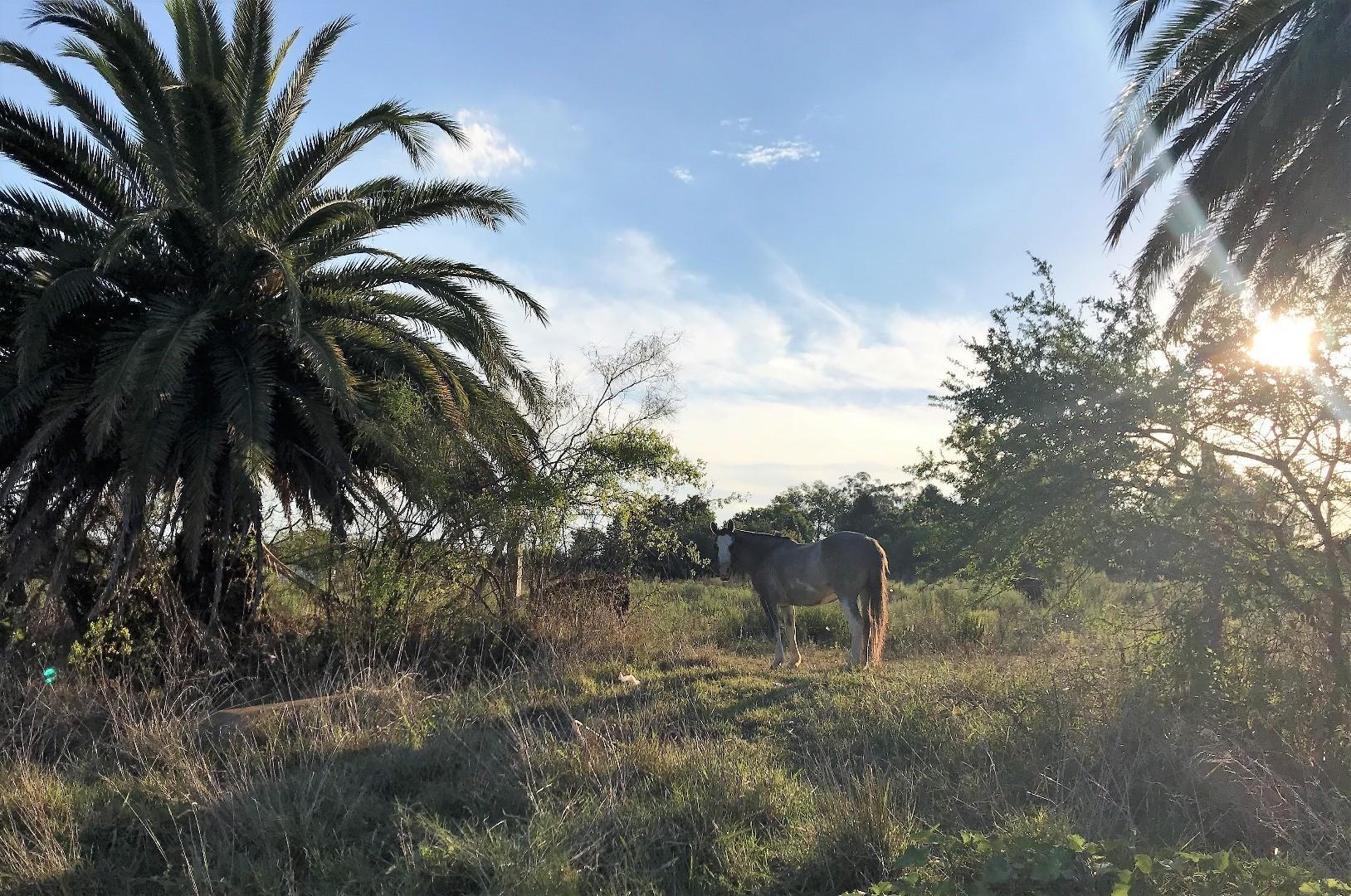 DUEÑO VENDE- terreno en venta, zona de quintas
