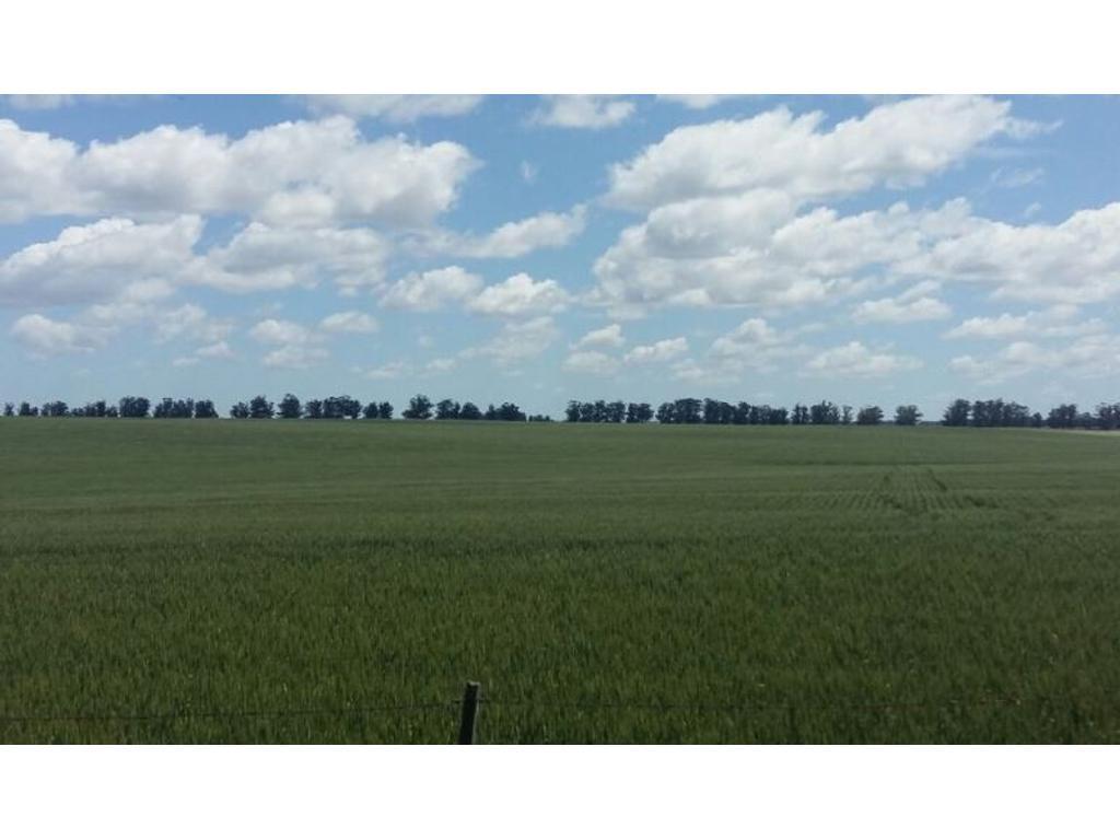 Campo agrícola excelente en partido de General Pueyrredón. Provincia de Buenos Aires
