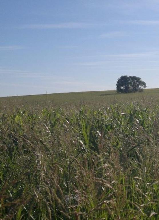 157 has AGRICOLAS AL ESTE DE SANTA ROSA, FINANCIACION