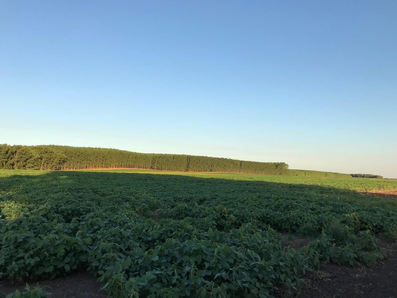 Campo de 52 HA de excelente suelo agricola.